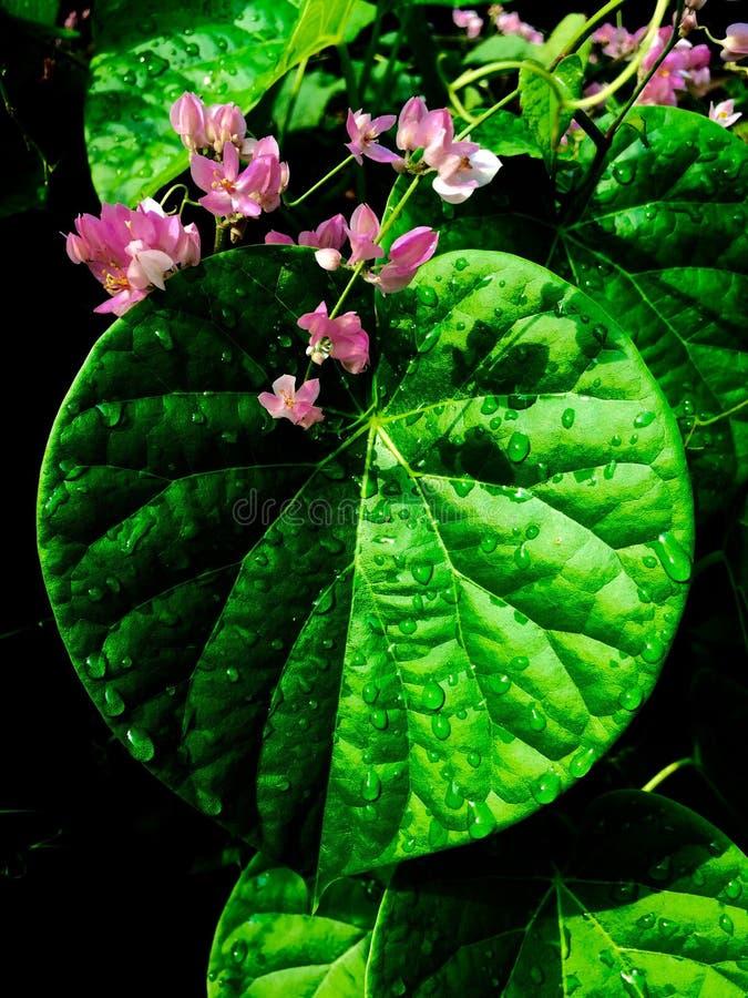 Feuille verte dans la forme de coeur photo stock