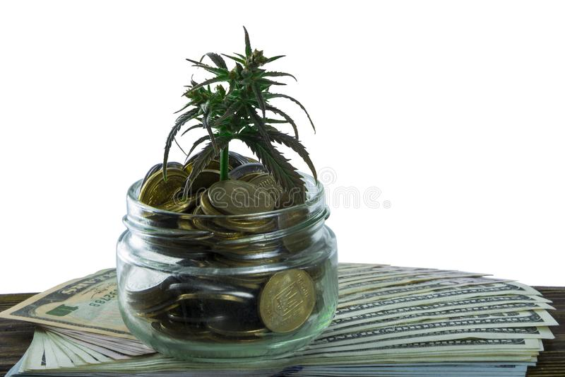 Feuille verte de cannabis, marijuana, Ganja, chanvre sur un Bill 100 dollars US Concept d'affaires Feuille et dollar de cannabis image libre de droits