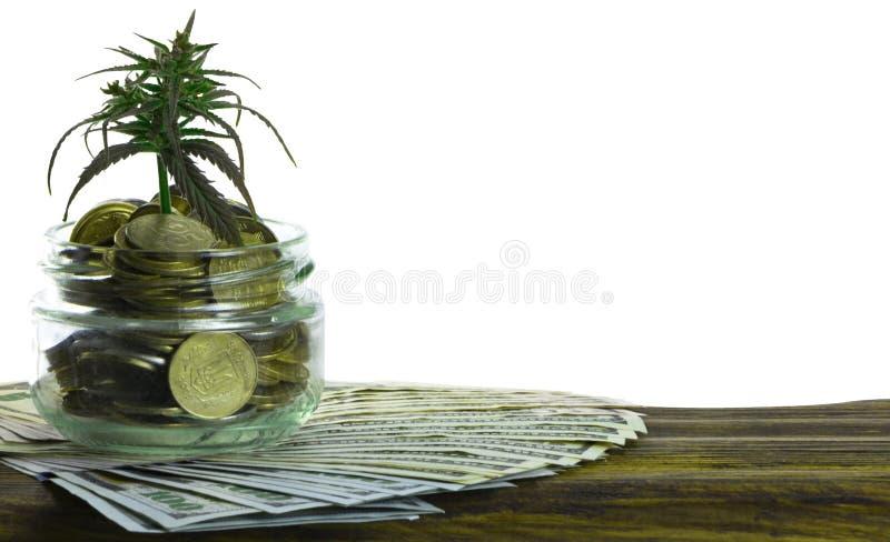 Feuille verte de cannabis, marijuana, Ganja, chanvre sur un Bill 100 dollars US Concept d'affaires Feuille et dollar de cannabis photos libres de droits