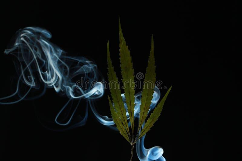Feuille verte de cannabis sur un fond noir enveloppé dans la fumée photo libre de droits