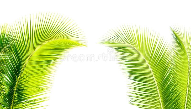 feuille verte de cocount de palmier d'isolement photos libres de droits