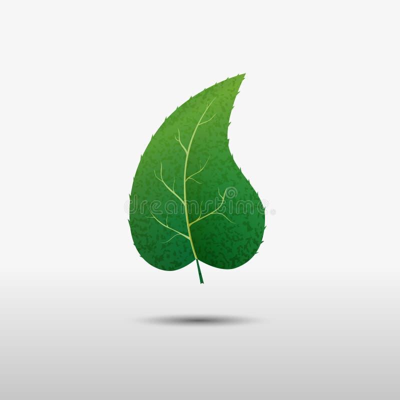 Feuille verte de l'arbre, icône de vecteur illustration de vecteur