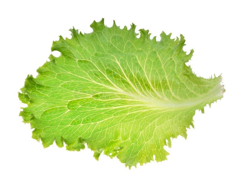 Feuille verte de salade 'Iceberg' image stock