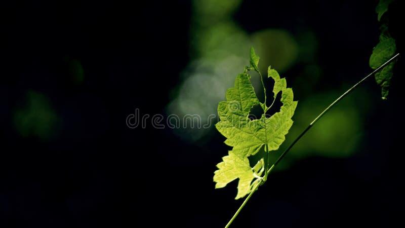 Feuille verte et couleurs noires image stock