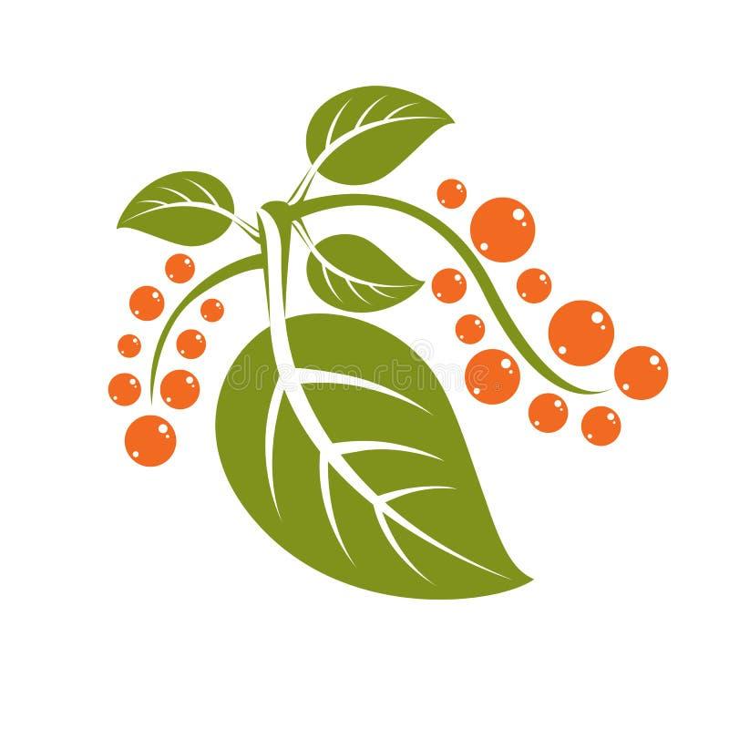 Feuille verte plate simple d'arbre de vecteur avec les graines oranges, n stylisé illustration libre de droits