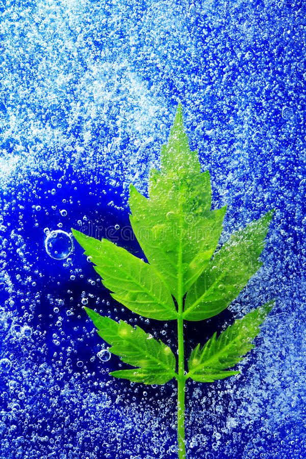 Feuille verte sous la glace photographie stock libre de droits