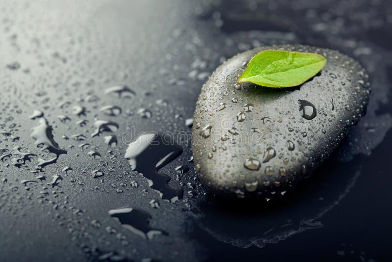 Feuille verte sur la pierre de station thermale sur la surface noire humide photographie stock