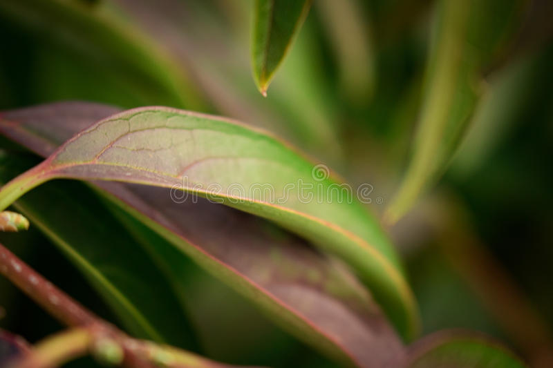 Feuilles images stock