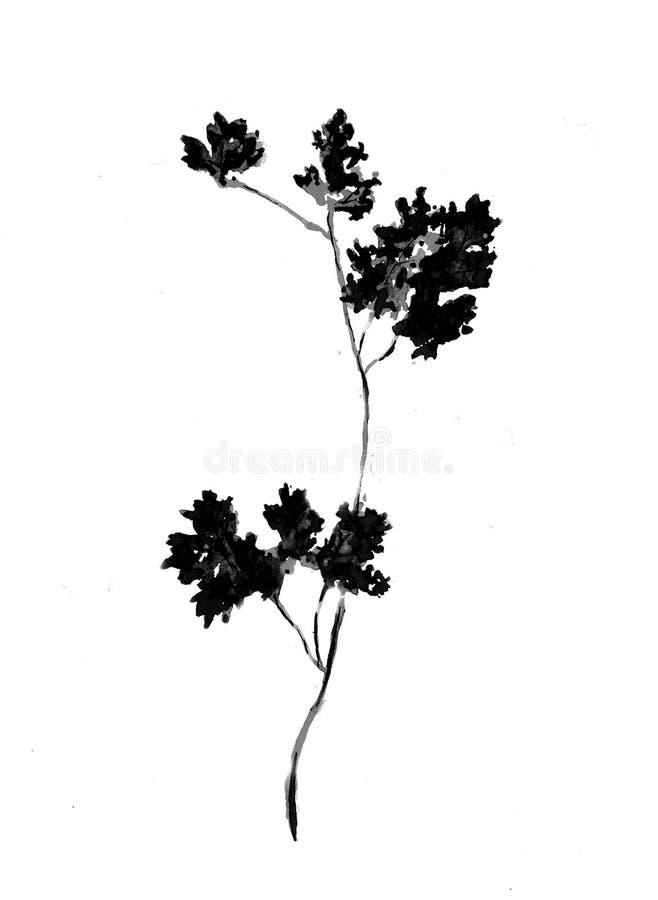 Feuilles abstraites noires de persil d'isolement sur le fond blanc, aquarelle de vegan de vue supérieure illustration de vecteur