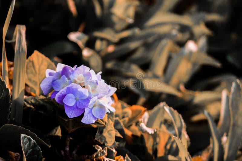 feuilles admirablement créées de dièse de fleur photo stock