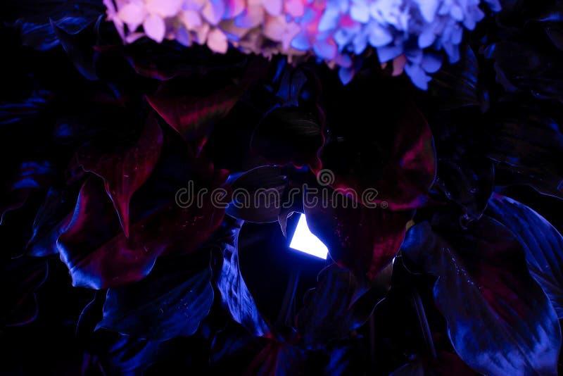 Feuilles au néon des fleurs image stock
