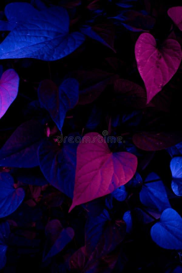 Feuilles au néon des fleurs photos libres de droits