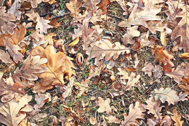Feuilles au sol en automne comme fond photo stock