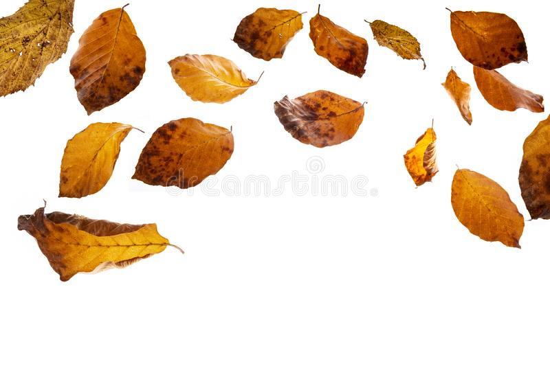 Feuilles automnales tombant photo stock