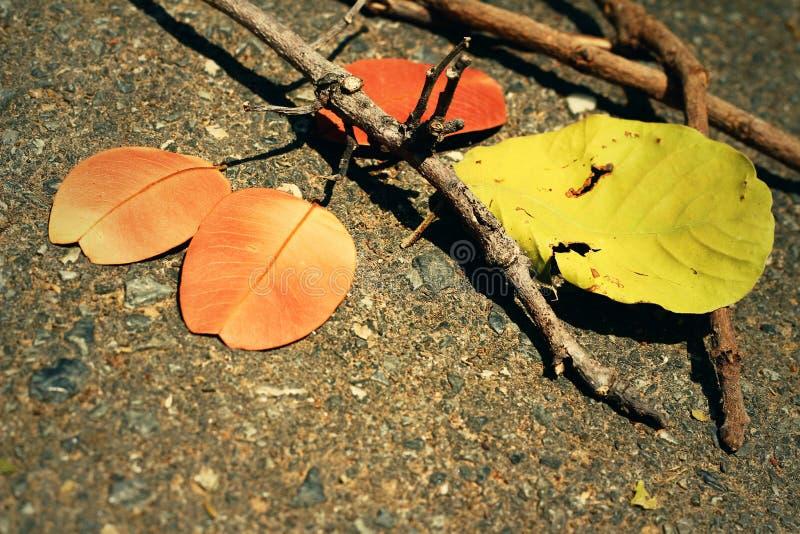 Feuilles avec des branches photographie stock