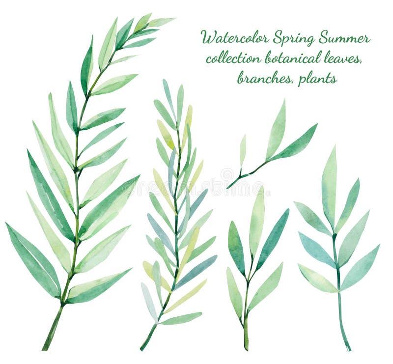 Feuilles botaniques de collection d'été de ressort d'aquarelle, branches, usines photos libres de droits