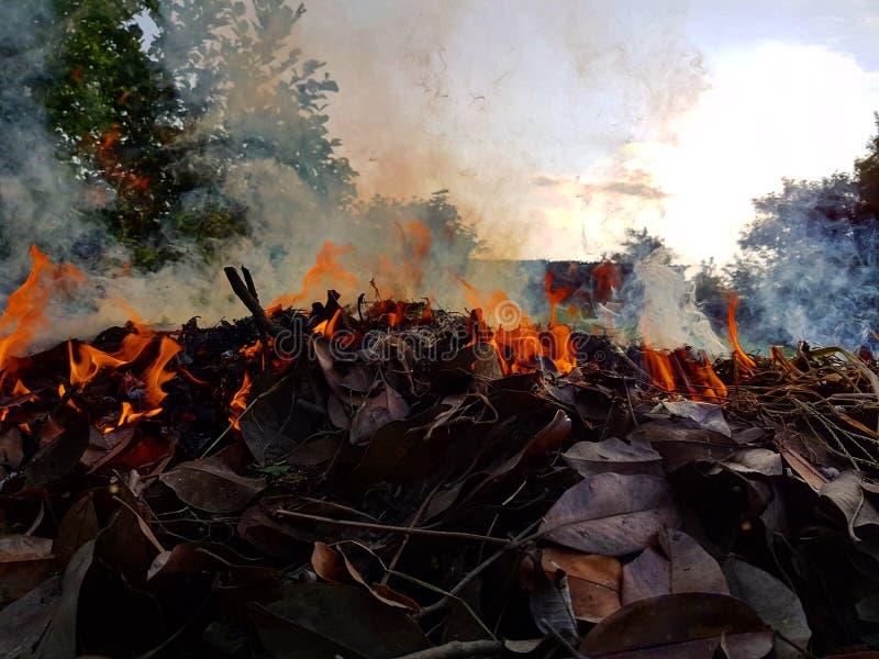 Feuilles brûlantes de magnolia photographie stock libre de droits