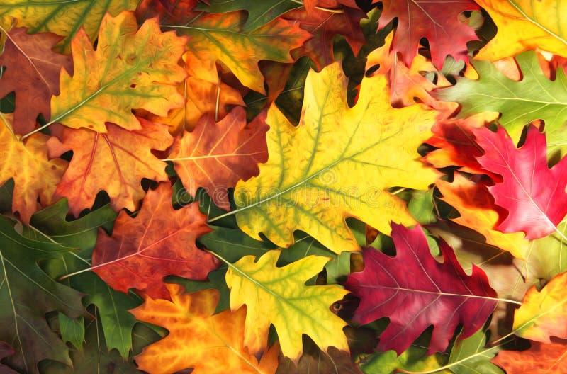 Feuilles colorées artistiques de saison d'automne de chêne image libre de droits