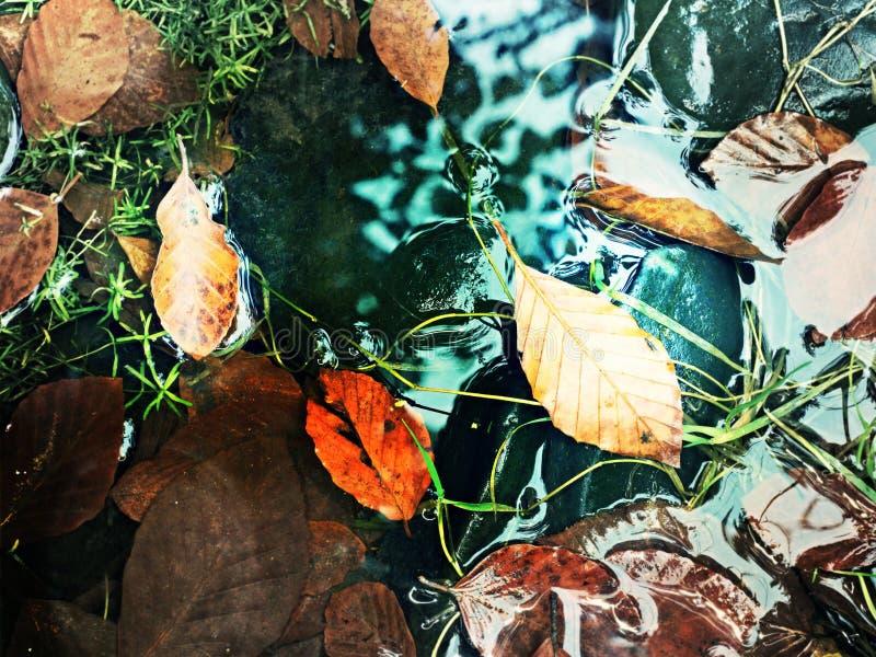 Feuilles colorées, couleurs d'automne dans le courant La feuille cassée jaune de l'arbre de hêtre photographie stock