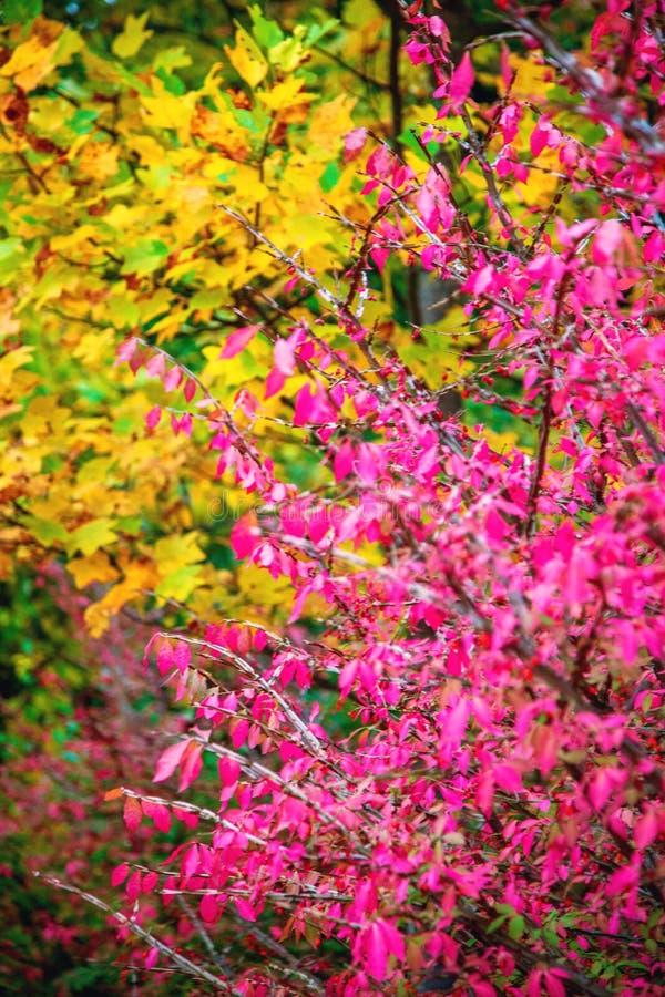 Feuilles colorées en automne photo stock