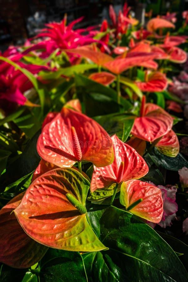 Feuilles colorées et fleurs de bel arc-en-ciel pendant l'automne dans a images stock