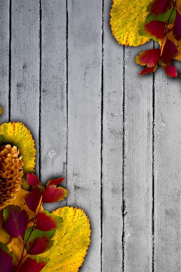 Feuilles colorées sur le fond en bois de vintage photos stock