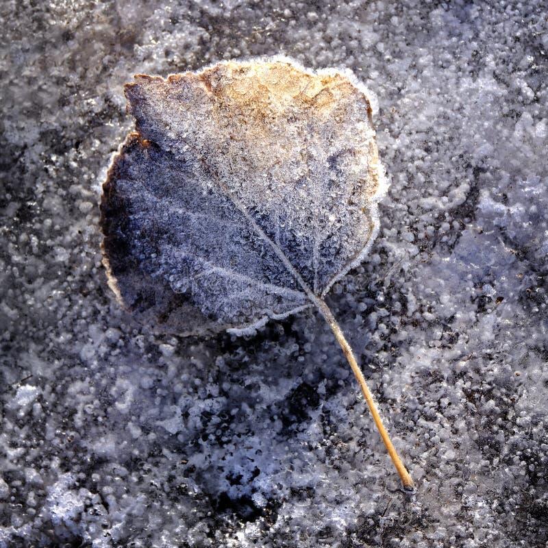 Feuilles congelées Détails du gel photo stock