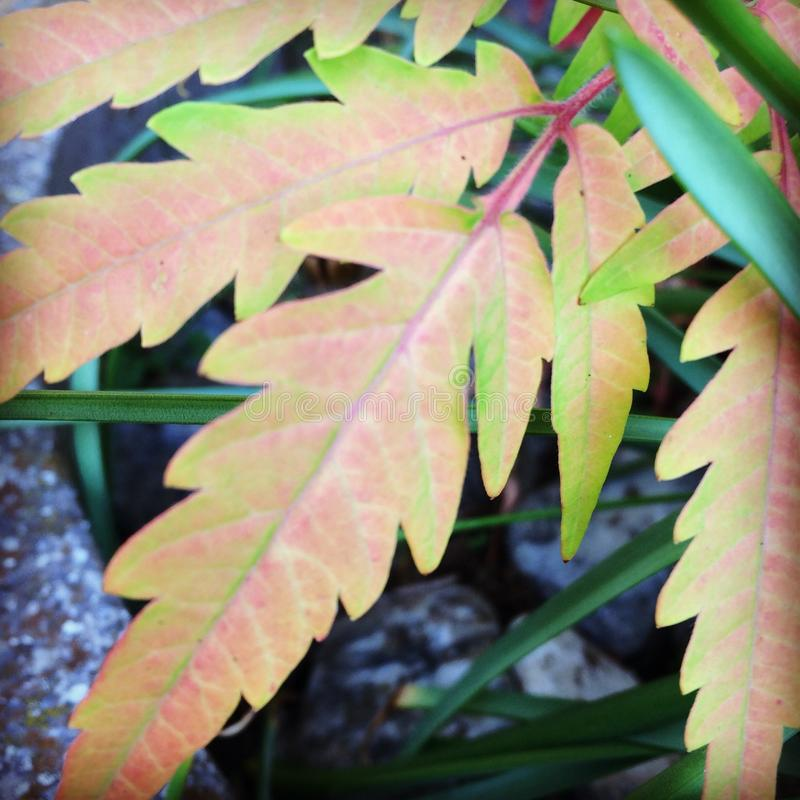 Feuilles croquantes photo stock