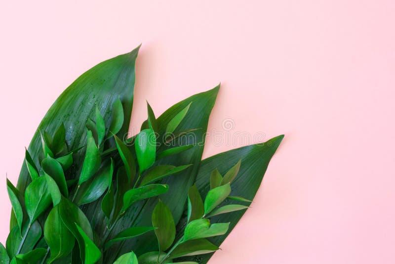 Feuilles décoratives tropicales sur un fond rose Vue supérieure Fin vers le haut photographie stock libre de droits