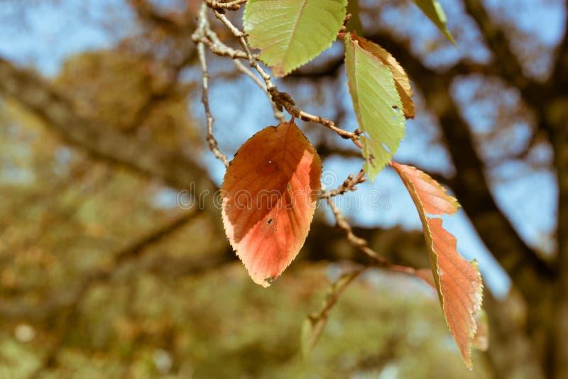Feuilles défraîchies pendant l'automne dans le jardin national de Shinjuku à Tokyo, Japon image stock