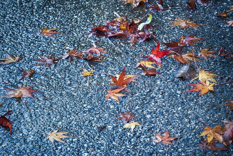 Feuilles d'érable d'automne sur l'asphalte pluvieux humide photographie stock