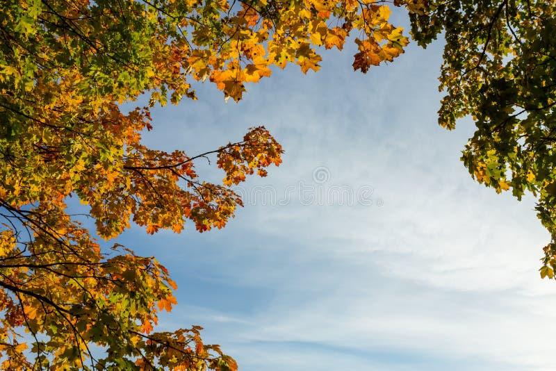 Download Feuilles D'érable Oranges Et Vertes Photo stock - Image du vert, érable: 45351902