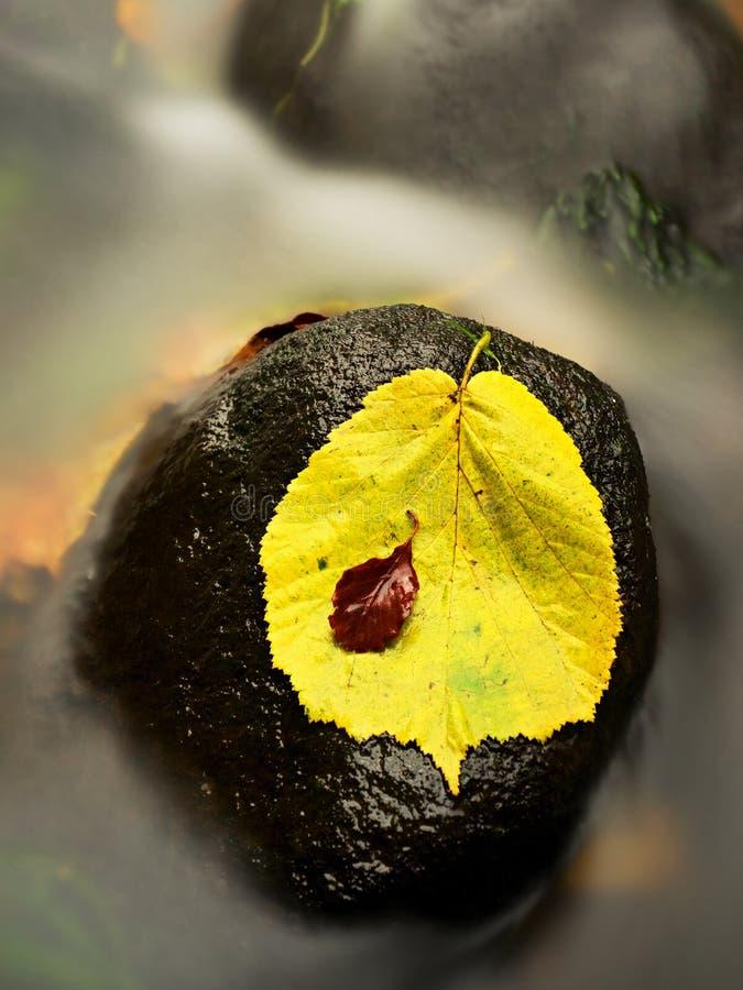 Feuilles d'érable rouges jaune-orange d'automne sur l'eau, feuille sèche photo libre de droits