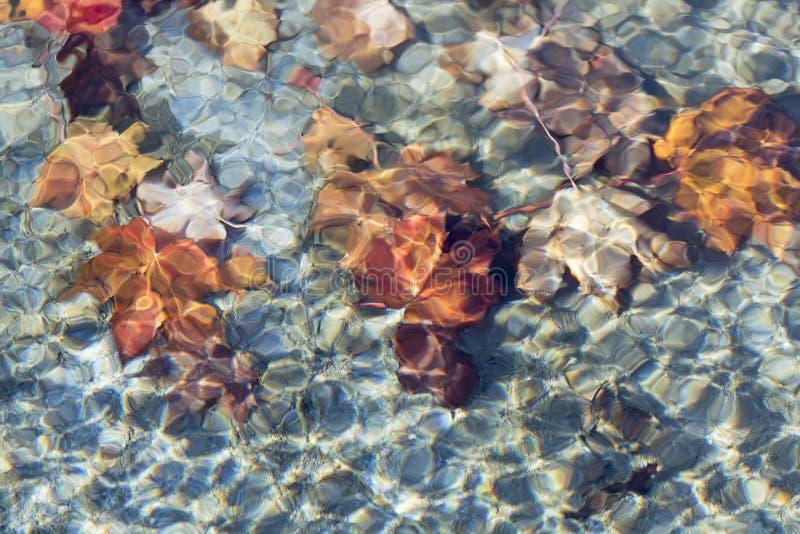 Feuilles d'érable sous l'eau photo libre de droits