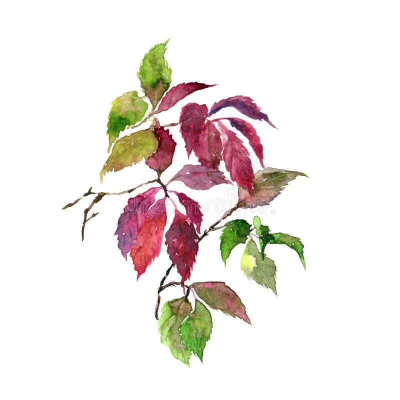 Feuilles d'aquarelle Automne floral Fond floral Autumn Floral Design Feuilles défraîchies de rose Carte de voeux florale illustration libre de droits