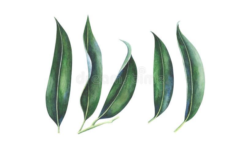 Feuilles d'aquarelle des fruits tropicaux exotiques illustration libre de droits