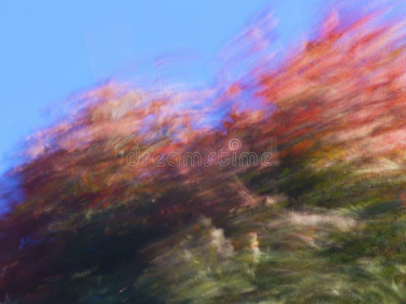 Feuilles d'arbre d'érable soufflées par le vent dans la chute photos libres de droits