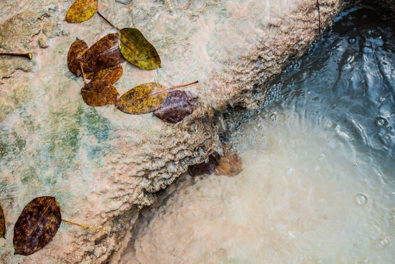 Feuilles d'arbre dans l'eau images libres de droits