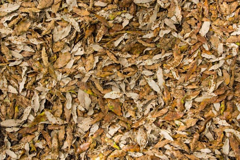 Download Feuilles d'automne 20 image stock. Image du fond, contraste - 77156795