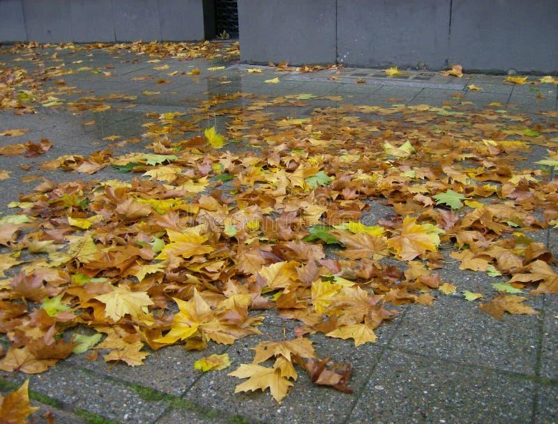 Feuilles d'automne au centre de la ville de Berlin photographie stock