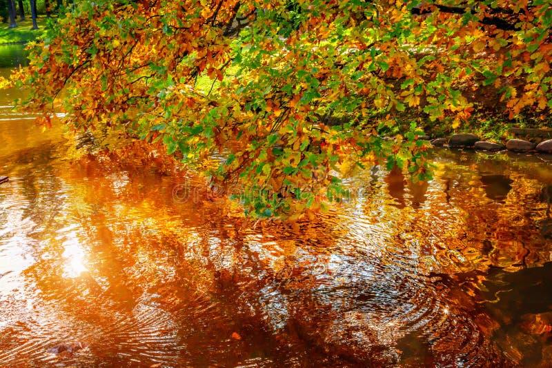 Feuilles d'automne au-dessus d'étang photos stock