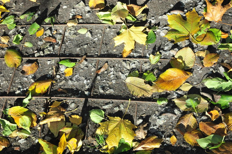 Feuilles d'automne au sol sur la grille photo stock