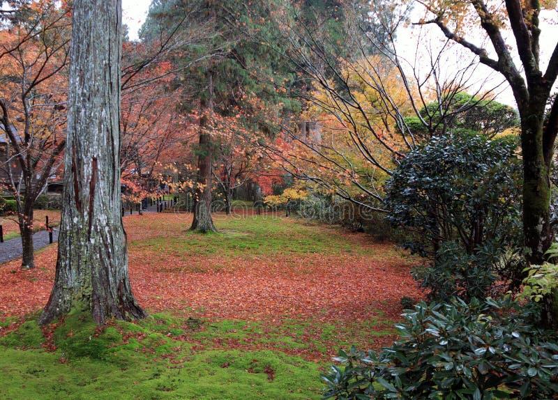 Feuilles d'automne avec la couleur jaune-orange et rouge verte dans le jardin photo stock