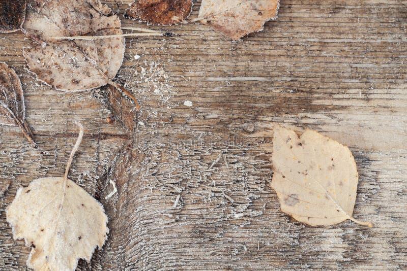 Feuilles d'automne avec le gel sur le bureau en bois photographie stock
