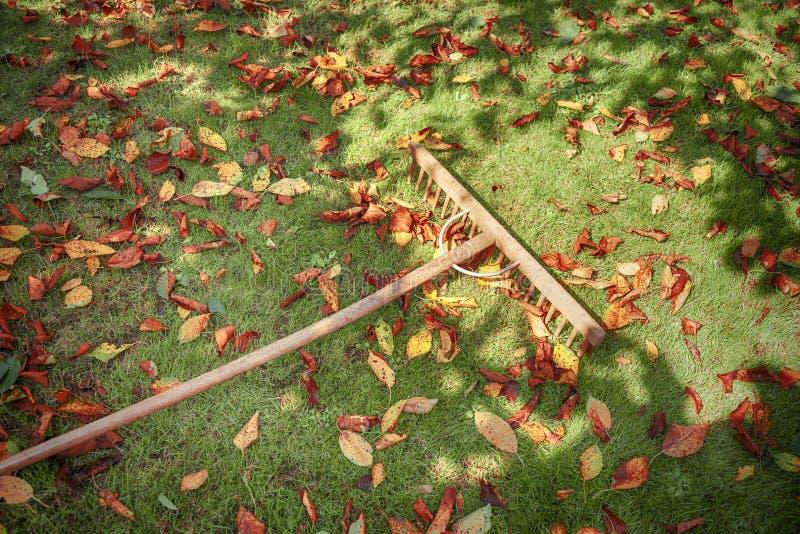 Feuilles d'automne avec le râteau en bois images stock