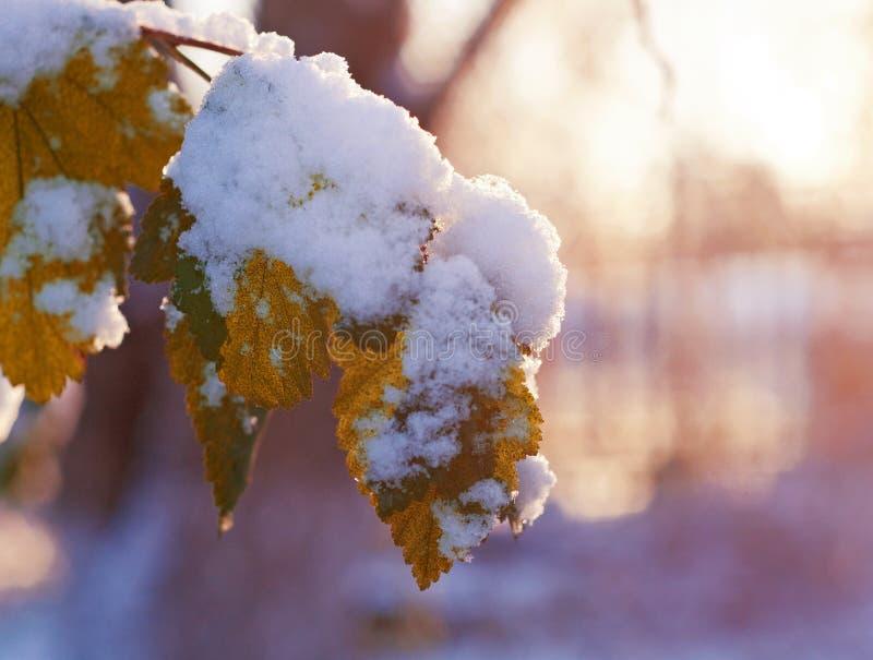 Feuilles d'automne avec le saupoudrage du gel photos libres de droits