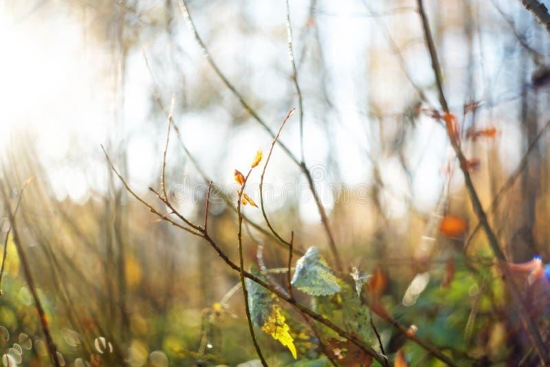 Feuilles d'automne avec les arbres brouill?s Fond trouble de chute photographie stock