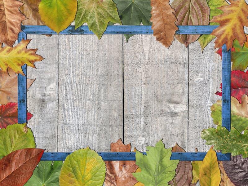 Feuilles d'automne colorées avec le cadre de tableau en bois bleu photo libre de droits