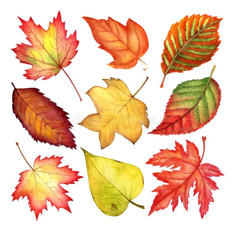 Feuilles d'automne colorées de belle aquarelle d'isolement sur le fond blanc illustration stock