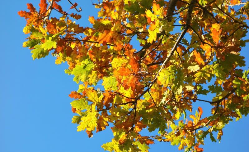 Feuilles d'automne colorées image libre de droits